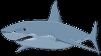 Акулий жир (Сквален) с острова Хайнань для очищения сосудов от холестерина